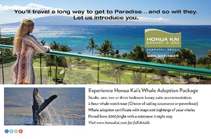 Hawaii Advertising, Branding, Agencies, Agency, Team Vision Marketing