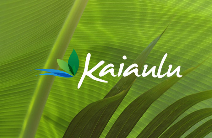 Logo Design, Hawaii, Maui, logos, logo designers, Branding, Team Vision Marketing